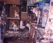Puppy Mill Cages Stacked-Resized_1.jpg
